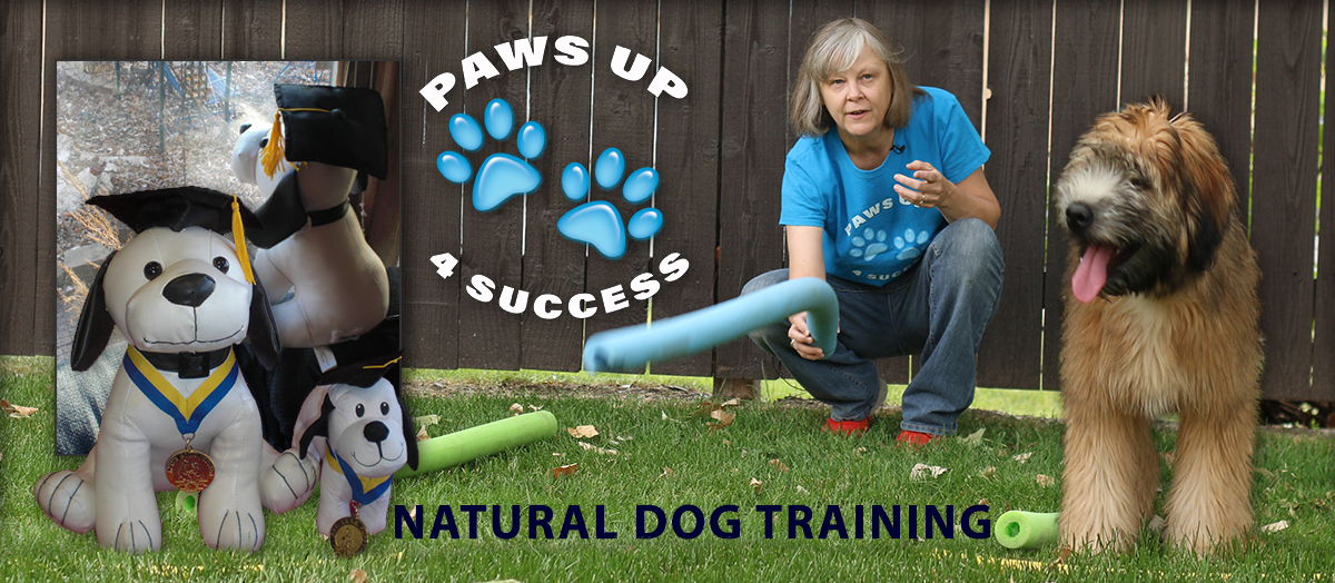 Positive Dog Training that helps your fur friend put a right paw forward